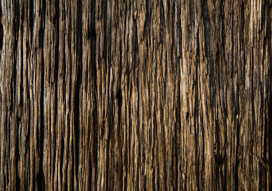 PSD Mockup Tree RAW Wood Grain