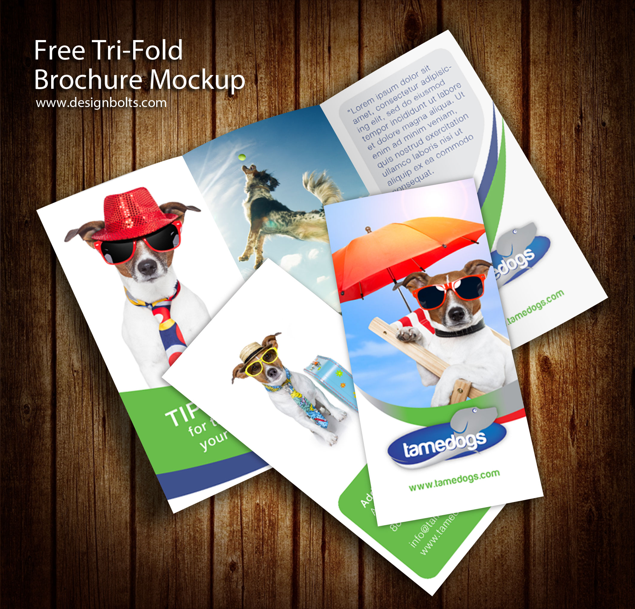 3 panel tri fold brochure psd mockups psd mockups for 3 fold brochure template psd
