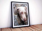 Framed Portrait Orientation Poster & Glazed Window Mat PSD Mockup